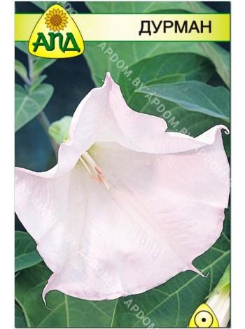 Дурман (Datura fastuosa)