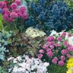 Семена смеси многолетних цветов