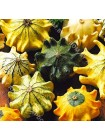 Тыква декоративная Корона (Cucurbita pepo)