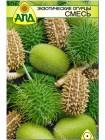 Экзотические огурцы смесь (Cucumis mini mixed)
