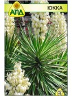 Юкка (Yucca filamentosa)
