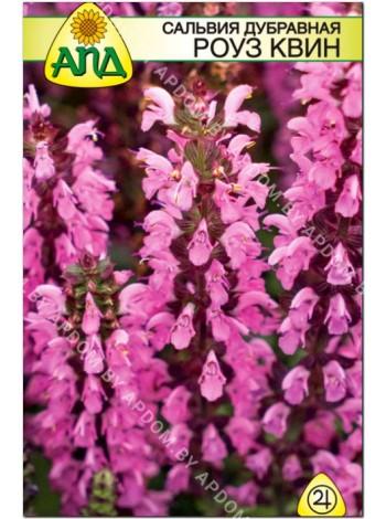 Сальвия дубравная Роуз Квин (Salvia nemorosa)